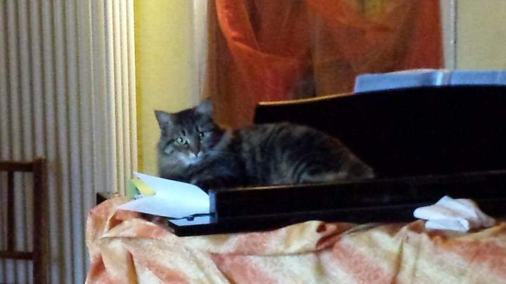 Matikde, la pianista