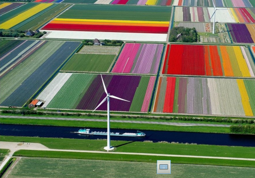 tulip field olanda